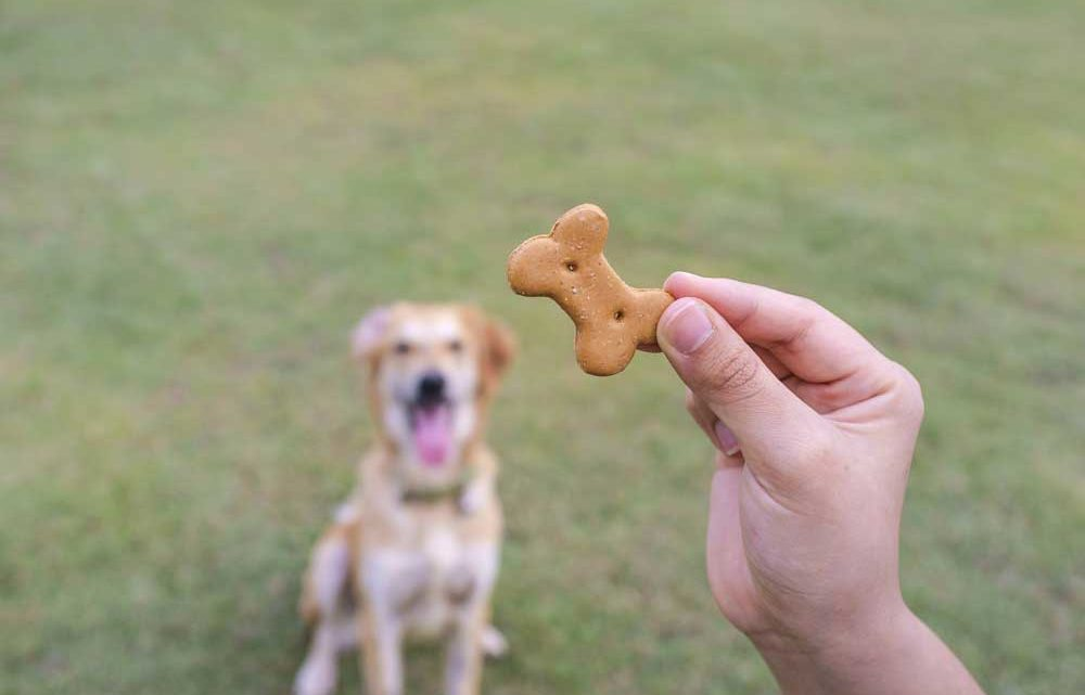 Dog Treat